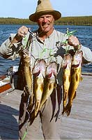Walleye fished in pipestone lake